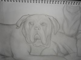 Dog Sketch by PardonMyParadox