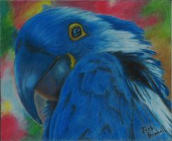 Parrot by joshuabrimhall4