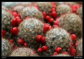 cacti by weem