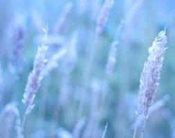 Soft fields by pqphotography
