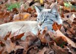 Zaboo in the Leaves by coffeenoir
