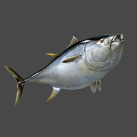 Tuna for XPS by wadamen