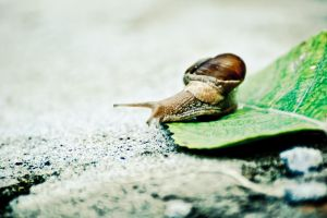 Snail on Leaf by adiota
