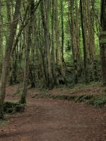Wood Path Stock 2 by Idle-Emma-Stock