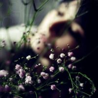 spring's shadow by prismes