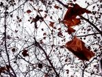 Autumn abstraction by HelRavenheart