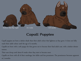 Capall Puppies by SirJudeNolan