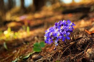 Fairy-Tale Forest Flowers by Carnaga