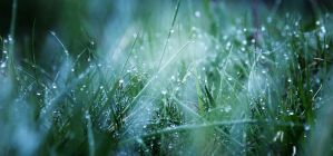 nature teardrops by vularia