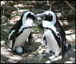 Penguin Family by mikewilson83