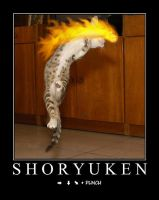 Shoryuken Kitteh by Omayga