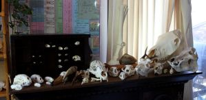Skull Collection #2 by lupagreenwolf