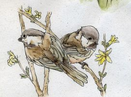 Carolina Chickadees by teriathanin