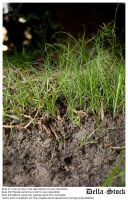 Grass n Dirt Cross Sectional by Della-Stock