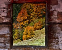 Autumn from window by lica20