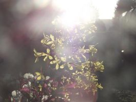 Ornamental Cabbage Flower and the Sun the Second by YesIamEccentric