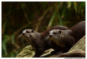 Otter Brothers II by TVD-Photography