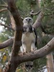 Harpy Eagle by photographyflower