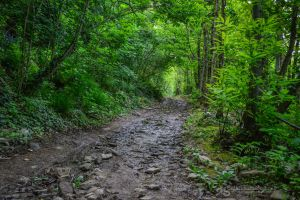 slippery green way by akthuro