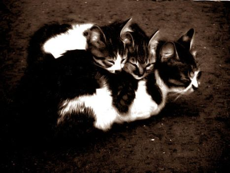 Cats by morcus
