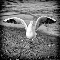 I dance for bread by antarialus