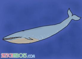 whale by SketchHeroes