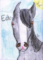 .Echo,MyMindsSpinning. by FollowingFilly