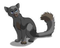 Kitten Contest - Ashymaniac by Ebonycloud-Graphics