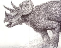 Triceratops sketch by Tolousse59