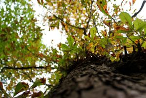 Leafs Above -15 by lifeforceinsoul
