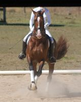 Horse - dressage piroutte by Chunga-Stock