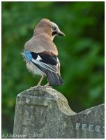 Jay On Headstone by andy-j-s