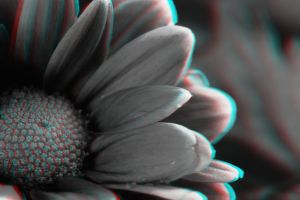 Flower in Grayscale 3-D conversion by MVRamsey