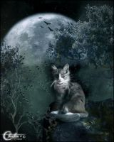 Chat de nuit by cflonflon