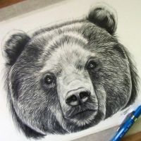 how to draw a panda bear face