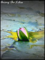 Among the Lilies by ospr