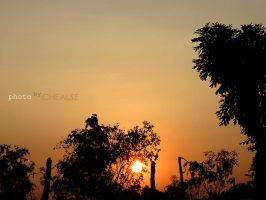Sunset 5 by chealse