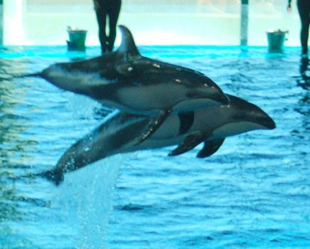 Dolphins by mcb011789