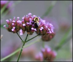 Bumbling around by Flower-of-Grace