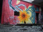 Sunflower by elseed