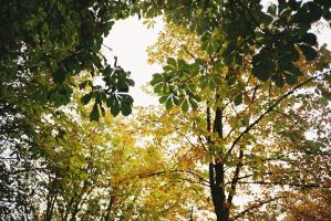 leaves by spiti84