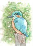 kingfisher by annwer