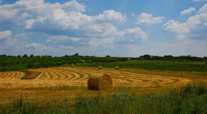 Hay Field I by CSC78