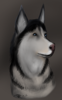 husky by NeonDefined