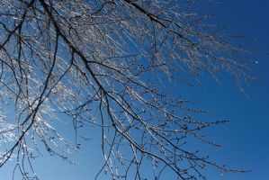 Icy Branches Against Blue Sky by KameleonKlik