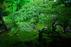Portland Japanese Garden, I by coulombic