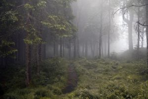Misty Forest Stock V by Angband