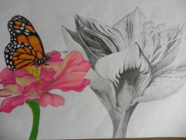 Drawing of Flowers by OrhideArt