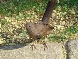 Brown Bird in Vienna by LadyScale