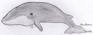 Blue Whale by BamaBelle2012
